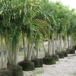 Gal-trees-04