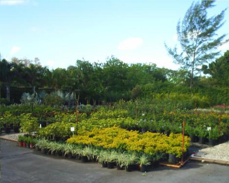 shrubs-plants